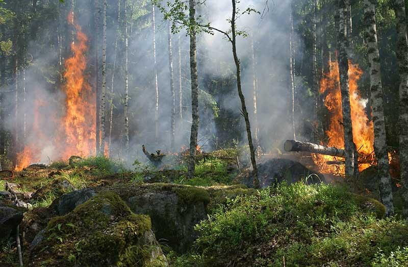 Actuar frente a un incendio forestal